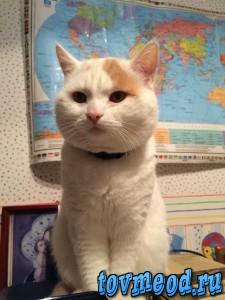 Герой истории, житель России, а теперь и кот-путешественник Финя,  теперь живет в Израиле